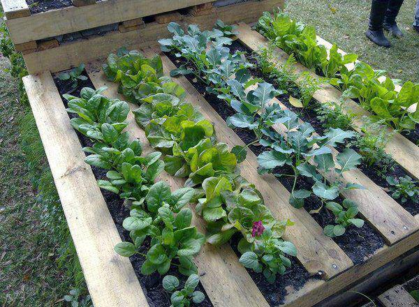 unique garden ideas klce classy 97