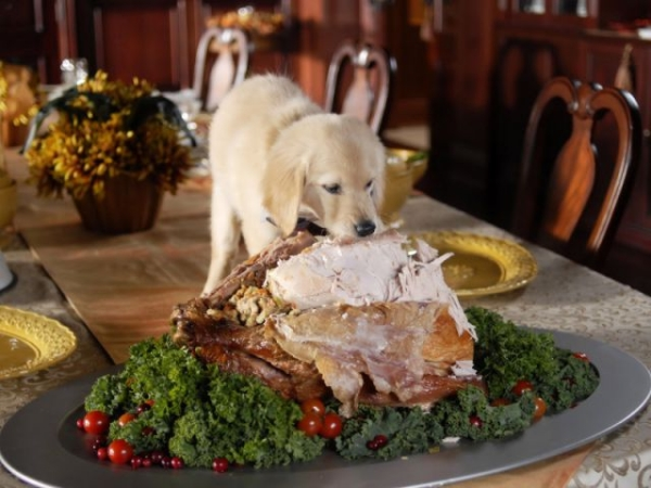 Thanksgiving What Your Dog Can Eat