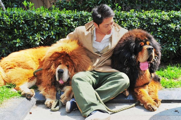 CHINA-DOG-OFFBEAT