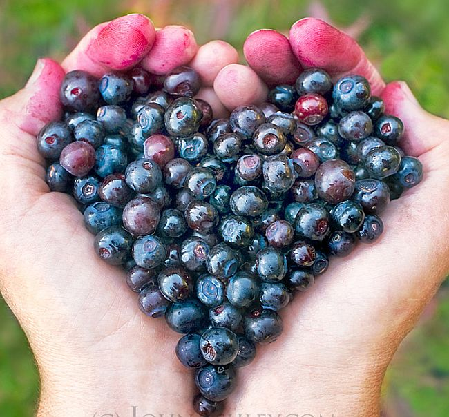 Huckleberry Heart by John Ashley